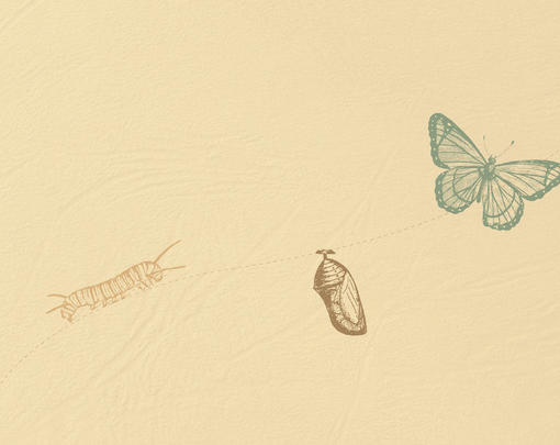A caterpillar turns into a chrysalis, and then into a butterfly.