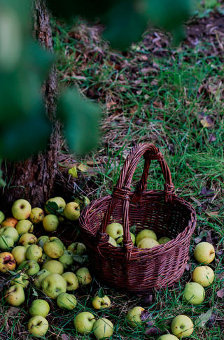 Apples in a basket