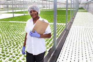 Evergreen Cooperatives worker inside a large greenhouse