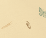 On the left a caterpillar, connected by a dotted line to a chrysalis at the center, then connected again by a dotted line to a butterfly on the right.