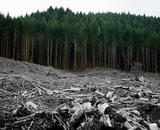 A forest devastated by clearcutting, with the cut trees faded in color to look like bones.